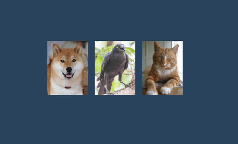 animals cards slider