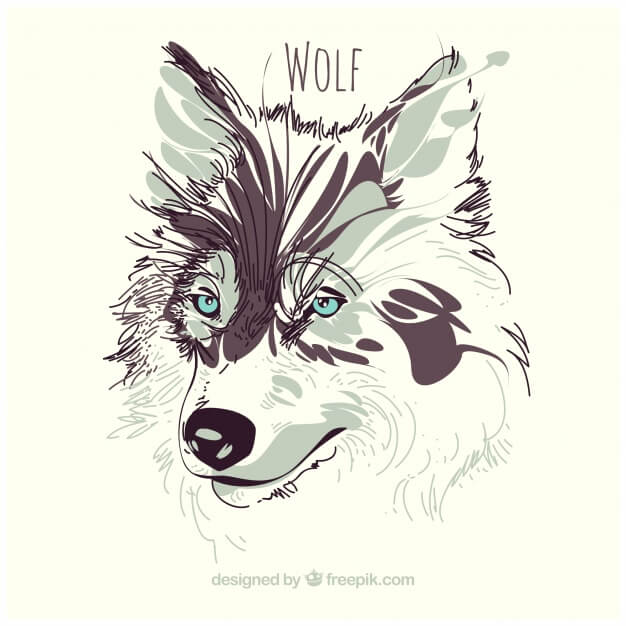 Watercolor wolf background