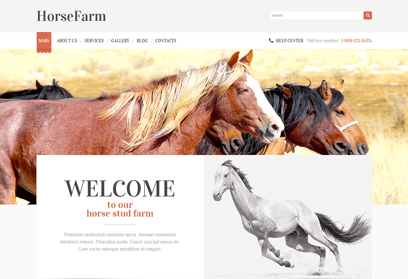 Promotion of Horse Farm