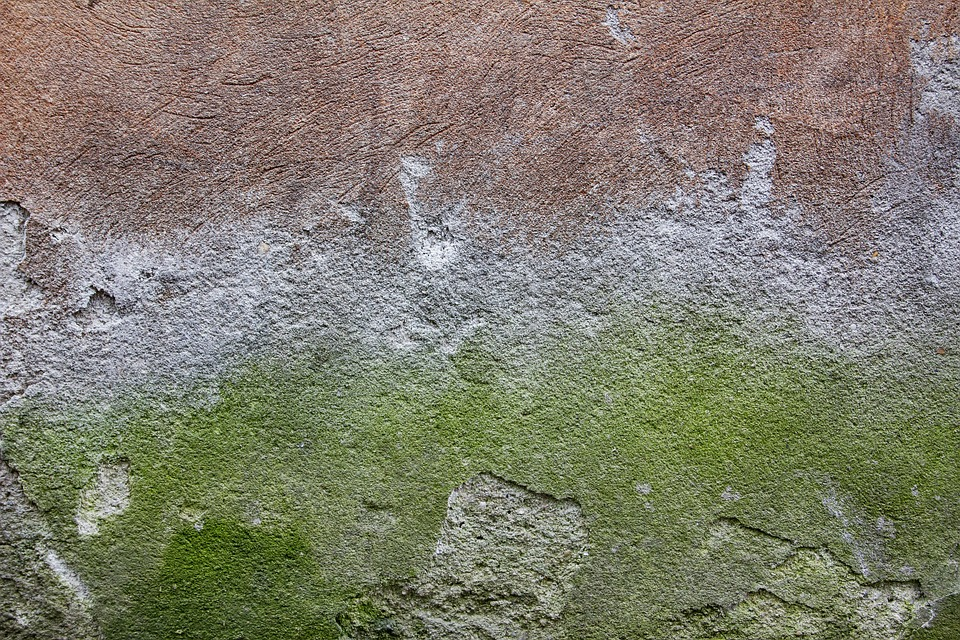 Concrete wall texture green