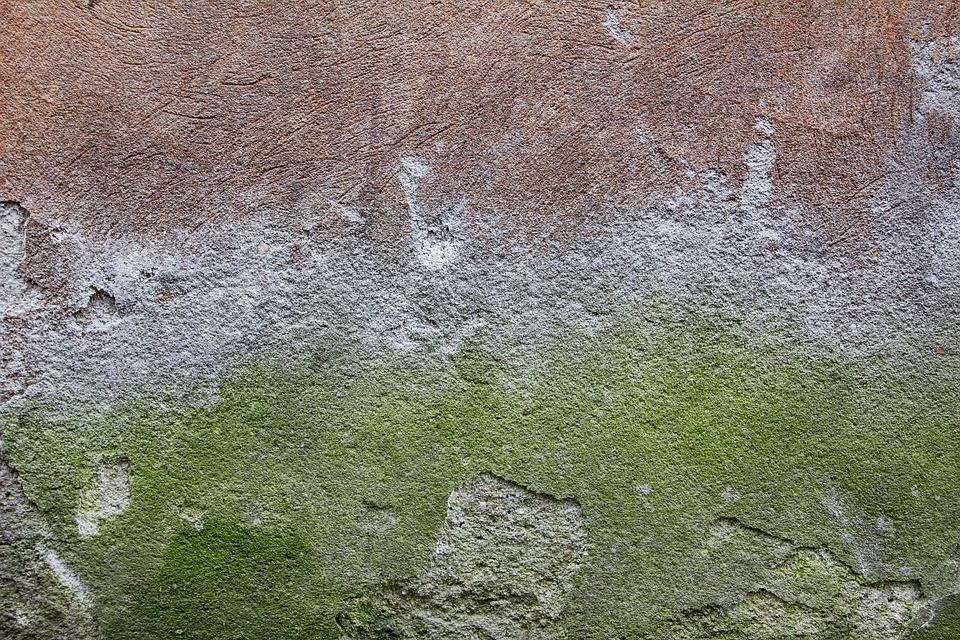 Concrete wall texture green