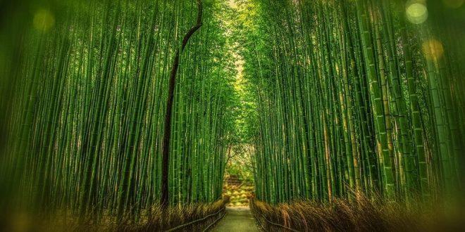 Free Bamboo Textures