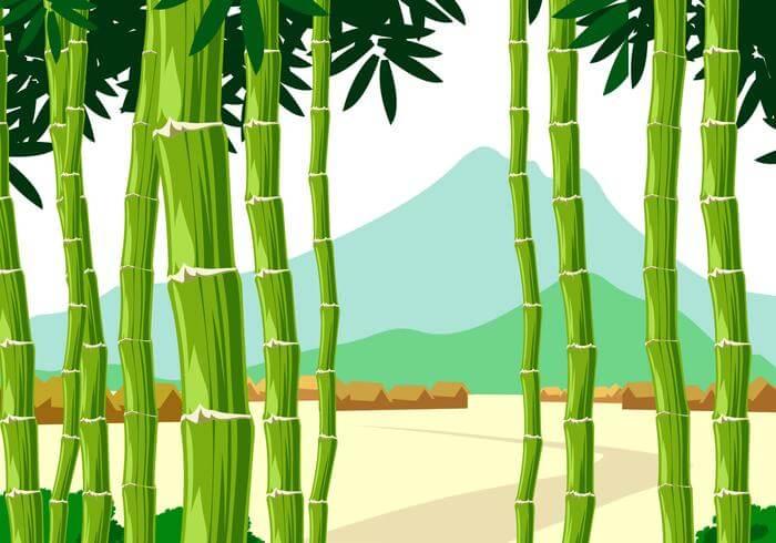 Panorama Bamboo