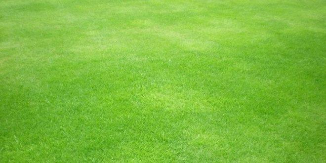 26 Best Free Grass Textures
